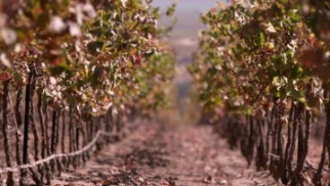 Go with your palate, behind the name - late season vineyard shot between two rows