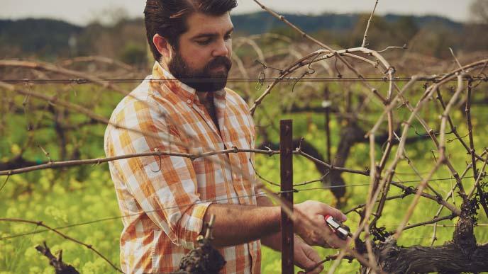 Joe Wagner trimming grape vines