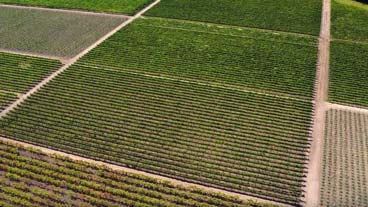 Go with your palate, patchwork of Napa - aerial shot of rows of Napa vineyards