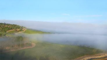 Quilt Valley Chardonnay Image - fog rolling over a green valley